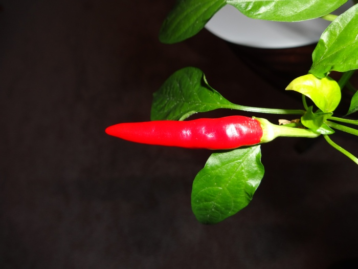 Thai pepper