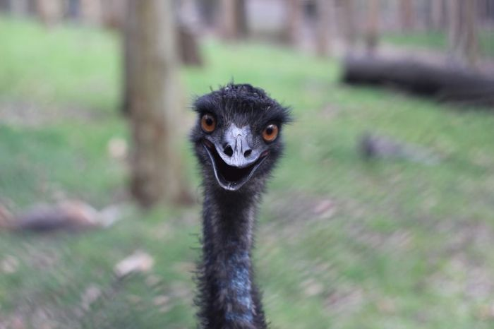 16. Happy Emu by Ruby Helyer.jpg