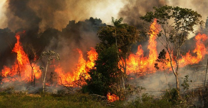 the-amazon-rainforest-is-on-fire-and-hardly-anyones-talking-about-it.jpg