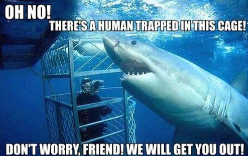 Misunderstood-Shark Cage